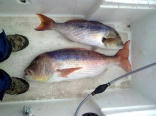 Angeln in Kroatien - Infos und Geheimtipps zum Fischen in der Adria Foto